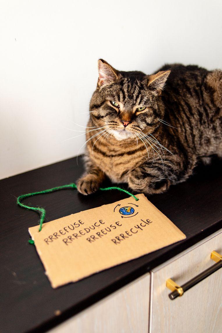 De kat van 'zero waster' Veerle Colle speelt niet met plastic speeltjes.   Beeld Josefien Tondeleir