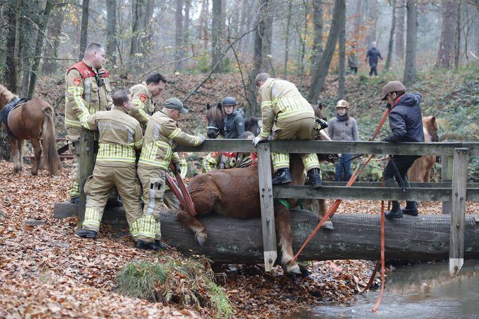 Brandweermannen proberen de pony uit zijn (of haar) benarde positie te bevrijden.