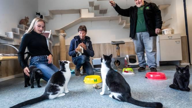 Helmonds dierenasiel gaat gebukt onder gemiauw; 'we kunnen geen kat meer kwijt'