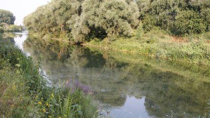 Olievlek van twee kilometer lang in de Dender