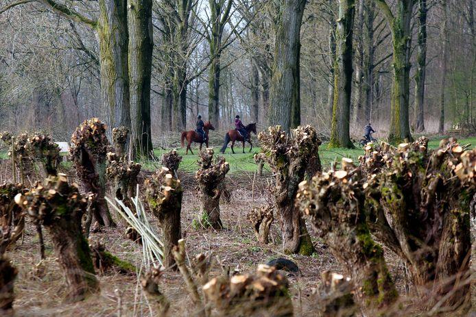Geknotte wilgen bij het Almbos.