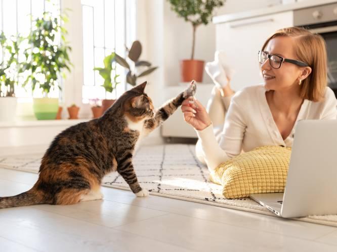 """""""Je kat is niet chronisch vermoeid, hij heeft een gebrek aan ambitie"""": begrijp jij wat je kat je wil vertellen?"""