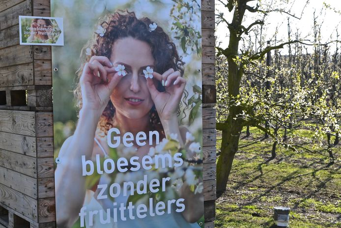 De boodschap is meer dan duidelijk. De fruittelers delen graag hun positieve bloesemboodschap met de consumenten.