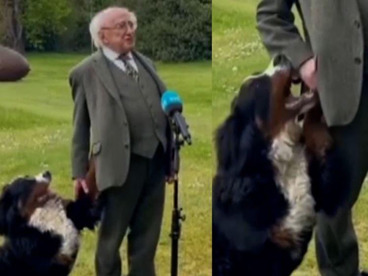 Iers president wil pers te woord staan, maar daar denkt hond anders over