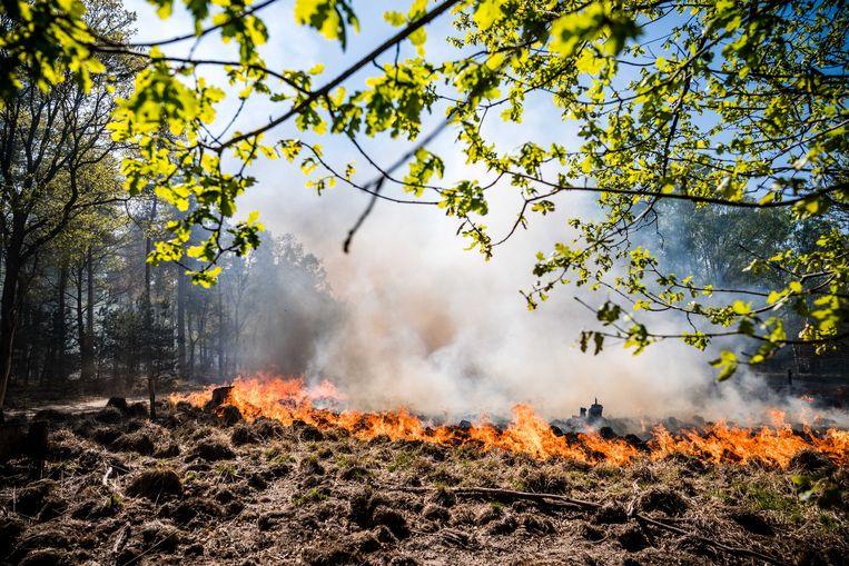 Brand in Nationaal Park de Meinweg. Zo'n 175 hectare bos en hei zijn grotendeels door brand verwoest. Beeld ANP