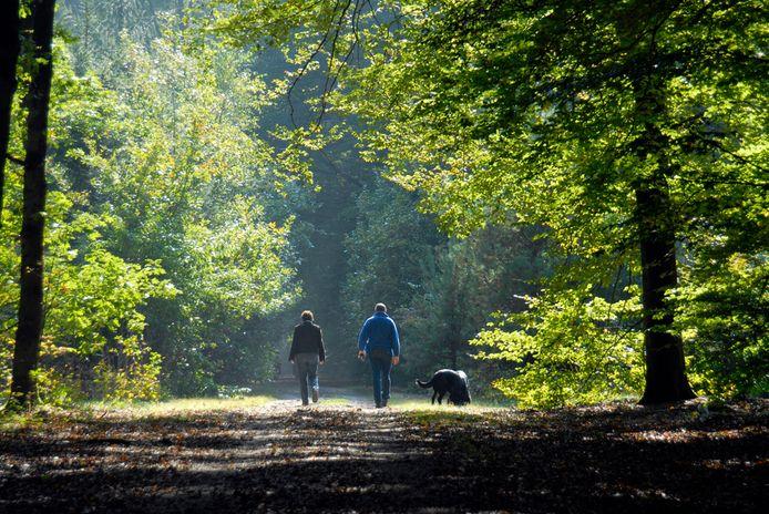 Lichte activiteiten, zoals wandelen in het bos, is goed genoeg.