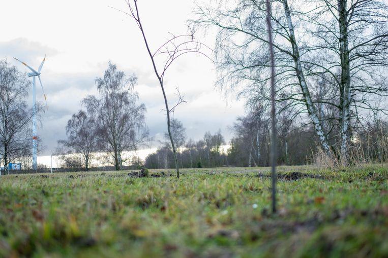 Op een braakliggend terrein langs de Gansbroekstraat plantte Phantom Tree Company 300 boompjes
