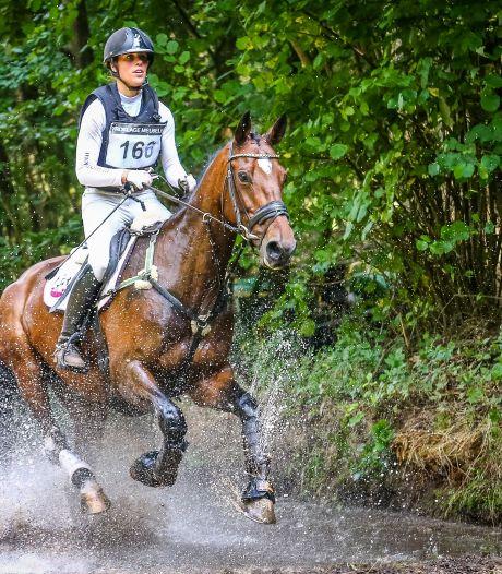 Hobbyfokker Roel Oechies uit Delden fokte een olympisch toppaard: 'Dit is de kers op de taart'