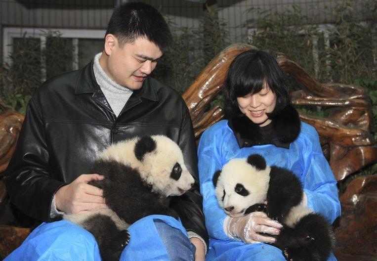 Oud-NBA-basketballer Yao Ming en zijn vrouw Ye Li spelen met babypanda's op het pandaopvangcentrum. <br /><br />Zes in gevangenschap grootgebrachte reuzenpanda's zijn in de Chinese  provincie Sichuan uitgezet in een omheind bosgebied van twintig hectare.  De dieren worden daar voorbereid op een terugkeer naar de wildernis.<br /> <br /> Onderzoekers hopen dat de panda's, die hun nieuwe leefgebied woensdag  voor het eerst betraden, leren hoe ze naar voedsel moeten scharrelen en  hoe ze zich moeten voortplanten, zodat ze uiteindelijk in staat zijn  zichzelf te redden. De dieren zijn tussen de twee en vier jaar oud en  zijn uitgekozen vanwege hun goede gezondheid, hun gedrag en hun gunstige  genetische eigenschappen.<br /> <br /> Als de panda's met succes terugkeren naar het wild is dat een opsteker  voor natuurbeschermers die de diersoort proberen te redden. Beeld reuters
