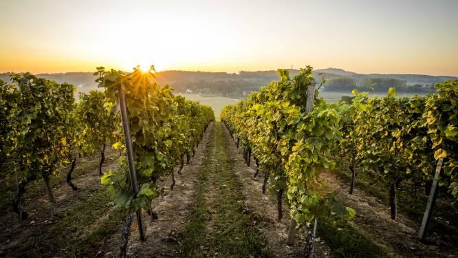 Franse boeren vrezen voor wijn- en fruitoogst na strenge vorst