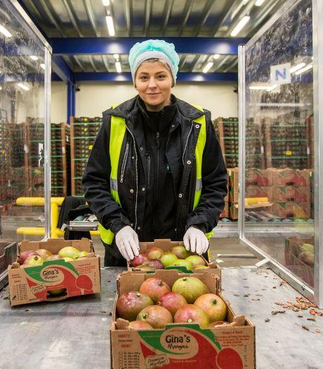 Blijven Poolse arbeiders weg uit Westland door aangepaste wet? 'Waarom zou ik daar óók belasting betalen!'