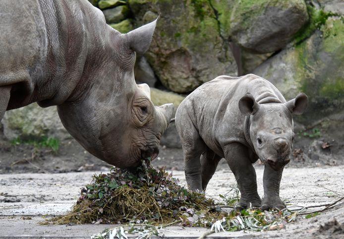 De dieren hebben hun eigen versnaperingen. De bezoekers kunnen daarvoor naar de buitenhoreca, want restaurants blijven dicht.