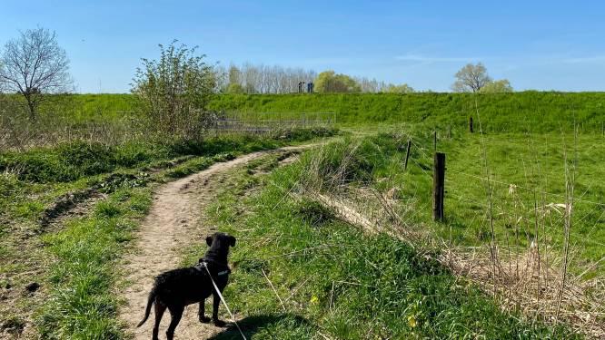 """Politie gaat hondeneigenaars controleren: """"Hond niet aan de leiband? GAS-boete"""""""