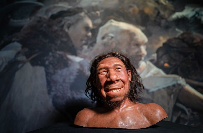 Reconstructie van de eerste neanderthaler van Nederland, met bijnaam Krijn, in het Rijksmuseum van Oudheden in Leiden.