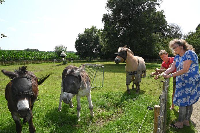 Bij gezinshuishoudouders Jos & Lobke van Dijk wonen uit huis geplaatste kinderen die bij hun eigen ouders niet goed op hun plek waren. Ze hebben rondom huis veel groen en dieren.