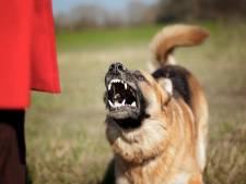 Celstraf voor man uit Elst die stiefzoon (11) laat aanvallen door honden