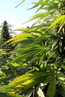 """La """"plus grande plantation de cannabis d'Europe"""" découverte en Espagne"""