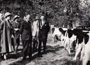 Koeienkeuring tijdens de paardenmarkt van 1959 in Tienhoven aan de Lek.