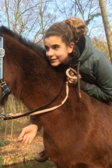 Gezocht: Arnhemse pony's Balou en Dasha, liefst levend en niet als biefstuk