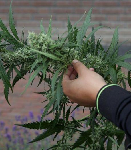 Bewoner vast na vondst hennepkwekerij met 300 planten in Dieren
