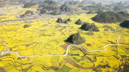 Koolzaad kleurt China geel