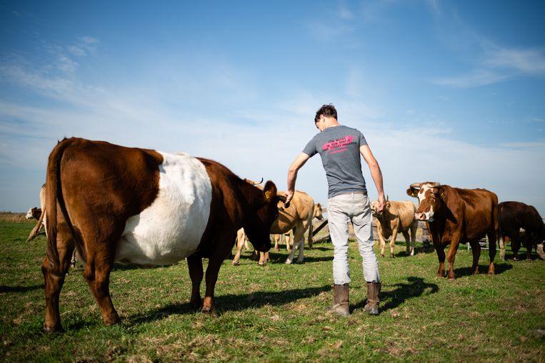 Steeds minder boeren wagen de sprong naar biologische landbouw.  Beeld Katja Poelwijk