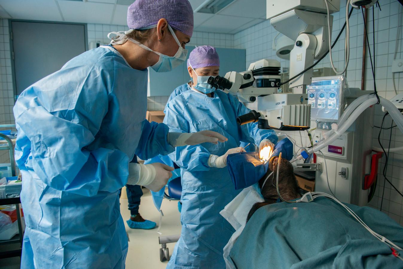 Fiffy tijdens de operatie.