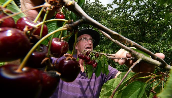 Roel Wellner in zijn hoogstamboomgaard. Hij heeft niet de oude rassen die de pomologische vereniging zoekt.