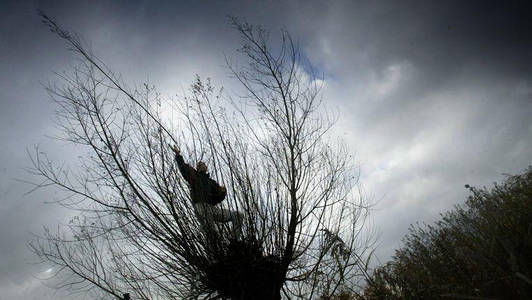 Takken worden verwijderd uit een Amerikaanse Vogelkers Beeld anp