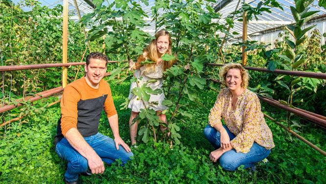 Biodiversiteit staat centraal op dit Hoevens bedrijf: 'Leuk om met nieuwe gewassen te werken'