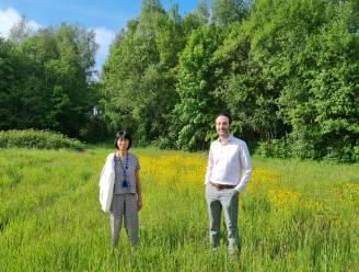 In maart nipt gered van de kap en nu aangekocht door gemeente: 6 hectare grote Zavelbos krijgt nieuwe invulling