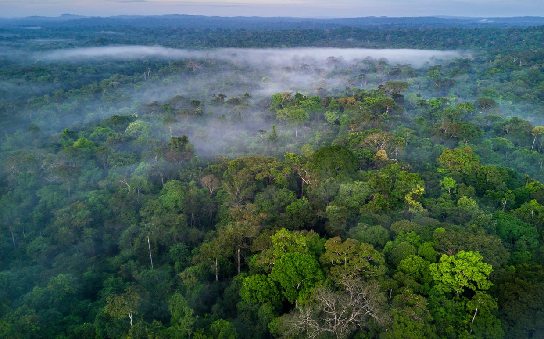 Het Amazonewoud in Brazilië is een van de cruciale gebieden voor de biodiversiteit. Beeld Getty Images
