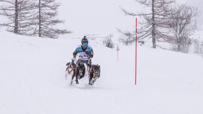 Geen podiumplaats voor Stefan Goris op WK sledehondenrace