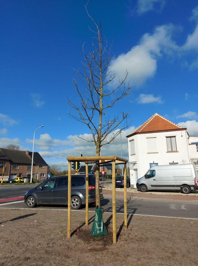 Onder meer de boom op het kruispunt met de N70 en de Eksaardebaan werd uitgerust met een waterzak.