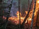 Brand in bos Drunen: mogelijke daders gespot tijdens wegrennen