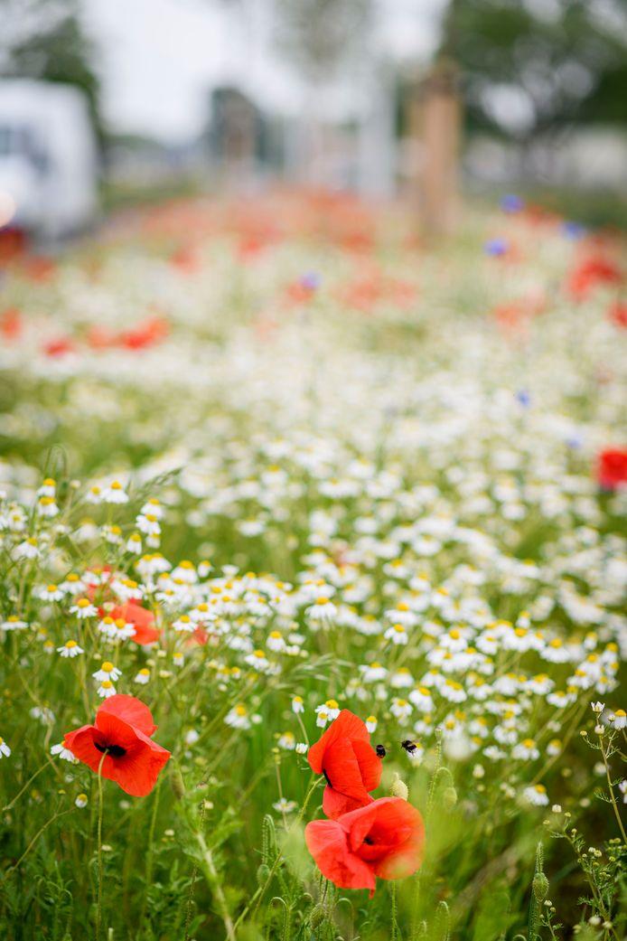 Wilde bloemen.
