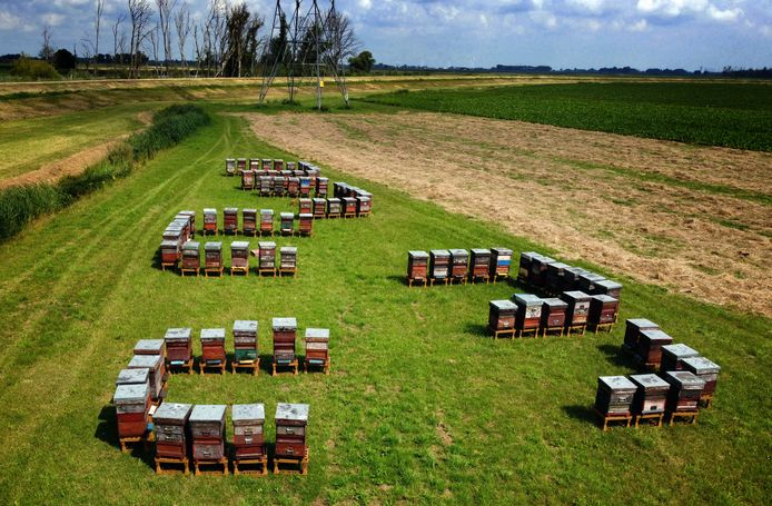 In een grasland ergens in de Noordwaard staan een dikke tachtig bijenkasten bij elkaar.