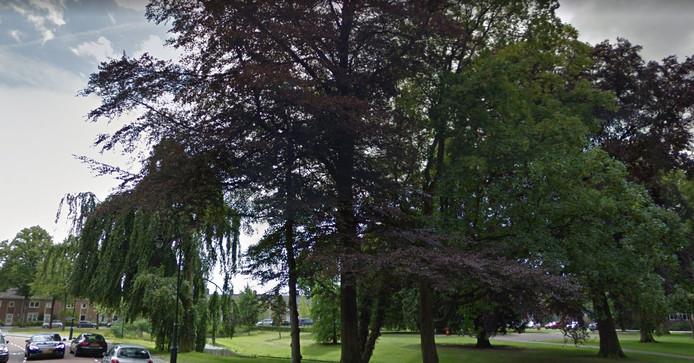 Een oude bruine beuk in het Lievevrouwepark is ziek en wordt gekapt.