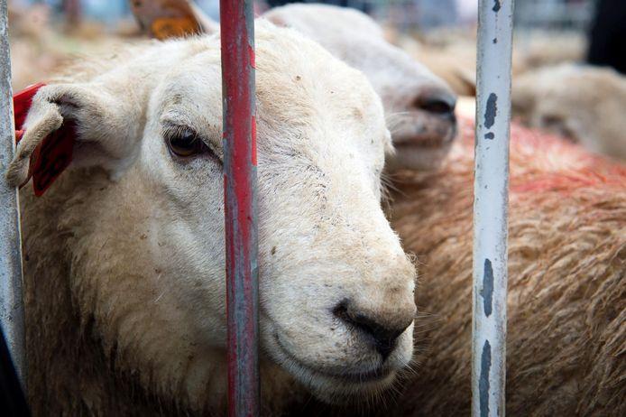 La Fête du sacrifice a lieu le dixième jour du douzième mois du calendrier lunaire islamique. Au cours de la célébration, les fidèles sacrifient un animal pour commémorer la soumission d'Abraham à Dieu.
