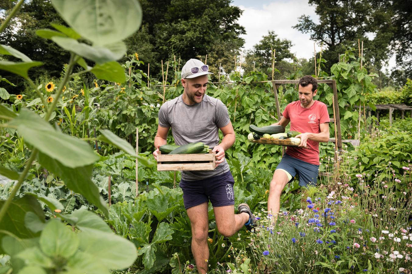 Erik Horstman (rood  shirt)  en Hunter Calder  (pet) hebben een prachtige oogst van allerlei groenten in hun moestuin.