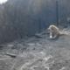 Hond bewaakt maand lang afgebrand huis van verdwenen baasje