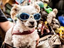 Deze motorrijders trekken veel bekijks met hond in zijspan: 'Hij hangt zijn kop buitenboord'