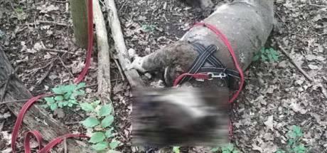 Stel dat hond 'Batman' voor dood achterliet in Wilhelminapark Rijswijk wordt vervolgd