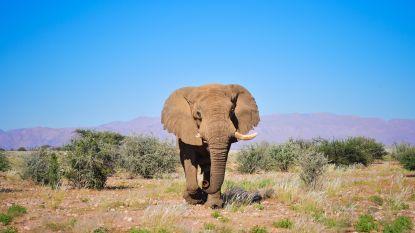 Woede en verdriet nadat iconische olifant 'Voortrekker' in Namibië wordt doodgeschoten door trofeejager