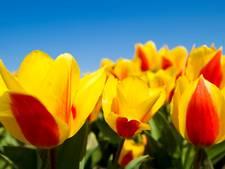 Bloemenstrook voor bijen wint wijkbudget