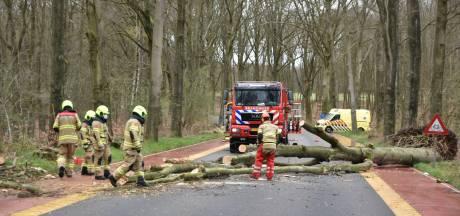 Ambulance moet omrijden door boom op weg