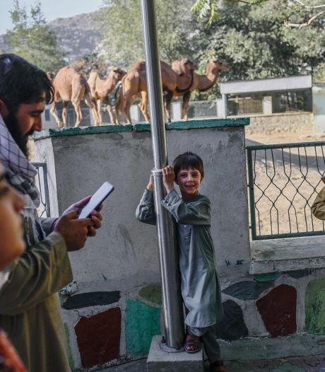 Talibanstrijders zwaaien met kalasjnikovs in dierentuin Kaboel; drie doden bij aanslag