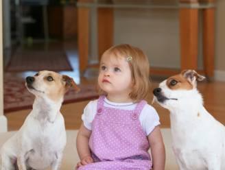 Hoe een hond in huis je kind beschermt tegen astma