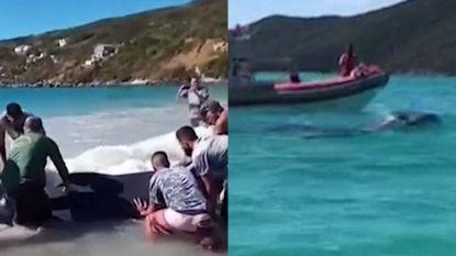 Toeristen duwen bultrug met man en macht terug in de zee