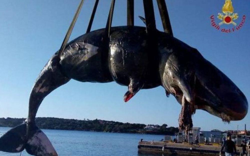 Des sacs poubelles, des filets, des lignes de pêche, des tubes et un bidon de lessive ont notamment été découverts dans l'estomac de l'animal.
